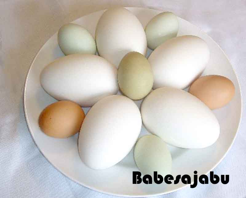 telur-ayam.jpg